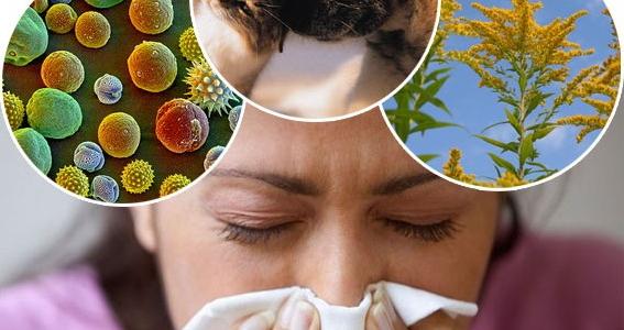 grass-pollen-allergy