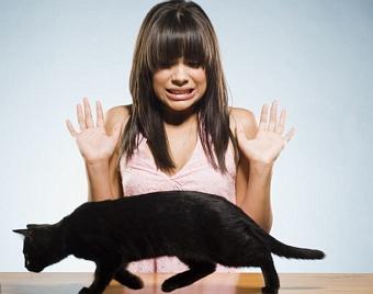 Аллергия на кошек симптомы, лечение и профилактика