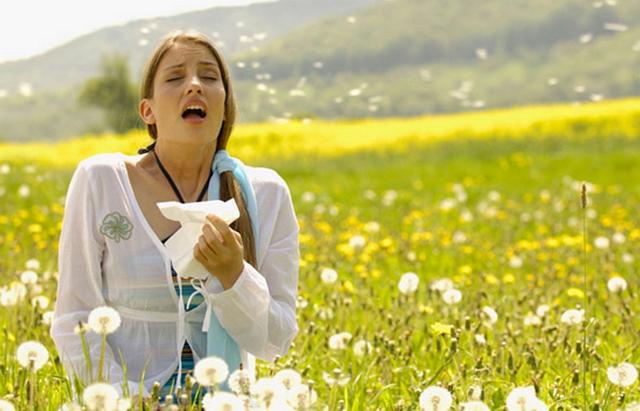 аллергии на пыльцу амброзии